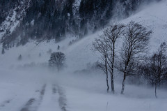 Schneesturm (tom.verduin@ymail.com) Tags: winter schnee snow mountainlandscape mountain landscape landschaft berglandschaft landschaftsfotografie rauris raurisertal seidlwinkltal pinzgau austria österreich