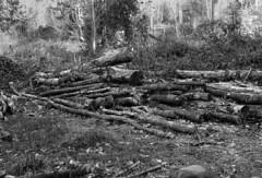 Logs (martin.bruntnell) Tags: logs canonftb