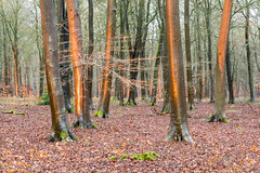 Forest Evening Light (Rachel Dunsdon) Tags: 2019 hampshire blackwood forest eveninglight