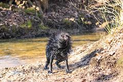 20190215-IMG_8727 (Alderbabbsack) Tags: struppi hund