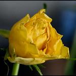 La fleur fanée... thumbnail