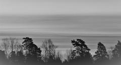 IMG_0006 (www.ilkkajukarainen.fi) Tags: blackandwhite mustavalkoinen monochrome espoo visit travel travelling happy life suomi finland finlande eu europa scandinavia threes puut landscape