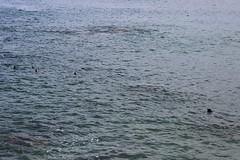 IMG_9779 (mudsharkalex) Tags: california pacificgrove pacificgroveca