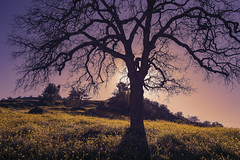 Nature Bloom (Vic Fine Art Photography) Tags: nature nationalpark beautiful bloom landscape tejon travel trees town river rural wild explore evening outdoor orange park mountains tree