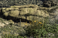 scenery along the Apache Trail in Arizona (TAC.Photography) Tags: arizona apachetrail roadtrip