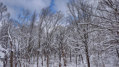 Blue Sky (blazer8696) Tags: 2019 brookfield ct connecticut ecw obtusehill scott t2019 tabledeck usa unitedstates wayne snow storm winter hdr img378567natural