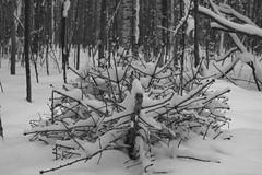 The Thing (Listenwave Photography) Tags: арт пейзаж зимнийпейзаж лес елка snow nature ngc closeup forest blackandwhite sigmadp3m foveon listenwavephotography