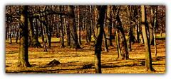 Przedwiośnie w parku. (andrzejskałuba) Tags: poland polska pieszyce dolnyśląsk silesia sudety europe panasonicdmcfz200 lumix plant plants park roślina rośliny drzewa drzewo trawa trees tree beautiful yellow żółty zieleń green color natura nature natural natureshot natureworld cień shadow shadows twigs gałązki flora floral view widok earlyspring przedwiośnie 1000v40f 1500v60f