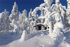 Winter Wonderland (Sandra OTR) Tags: finnland lappland finland lapland winter snow tykky trees cold landscape sunshine sunset sunrise blue sky vacation father christmas santa claus