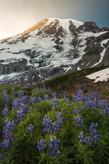 Paradise (kephart_kyle) Tags: august cliffs climb d800 flowers landscape mountains mt nationalpark nikon rainier snow summer sunset teague washington wild wildflowers