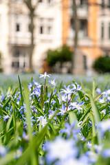 Springtime (Maria Eklind) Tags: flower sweden springtime dof malmö gustavadolfstorg depthoffield skånelän sverige se