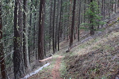 The trail dropped into a forest as it descended to Muddy Gulch (rozoneill) Tags: sterling mine ditch trail ruch jacksonville oregon hiking blm little applegate river
