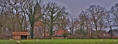 My village Havelte (henkmulder887) Tags: havelte village dorp drenthe holland thenetherlands kerk clemenskerk schipperskampweg schaap schapen wei weide wiese januari winter