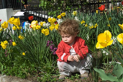 spring (greenelent) Tags: spring flowers springflowers garden child kid brooklyn 365 photoaday nyc