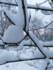 (gabre97) Tags: tree white snow day sky focus nature branch