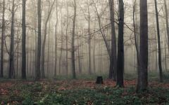 The Variety of Gray (Netsrak) Tags: baum bäume eifel europa europe herbst landschaft natur nebel wald autumn fall fog landscape mist nature woods forest