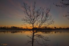 Sereno amanecer...33/365 (cienfuegos84) Tags: cienfuegos84 amanecer polvoranca reflejos agua dorados arbol silueta