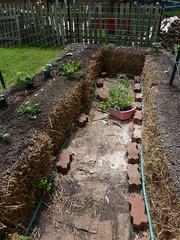 P1080763 (LPompey) Tags: garden strawbale strawbalegarden gardening basil swisschard tomatoes cucumbers newzealandspinach