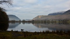 Shall I, shall I not? (moniquerebanks) Tags: labrador buttermere dawn dog lake meer see lakedistrict cumbria uk nikond7100 nature reflections mirror spiegeling natuur hills winter countryside countryliving unesco worldheritage