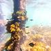 St Leonards Pier Underwater-32