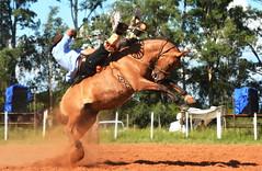 Pelanca e Meia-Lua da Combate (Eduardo Amorim) Tags: gaúcho gaúchos gaucho gauchos cavalos caballos horses chevaux cavalli pferde caballo horse cheval cavallo pferd pampa campanha fronteira quaraí riograndedosul brésil brasil sudamérica südamerika suramérica américadosul southamerica amériquedusud americameridionale américadelsur americadelsud cavalo 馬 حصان 马 лошадь ঘোড়া 말 סוס ม้า häst hest hevonen άλογο brazil eduardoamorim gineteada jineteada