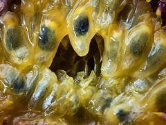 Monster Fruit (donnicky) Tags: holes macromondays closeup fillingtheframe food fruit healthyeating hole macro nopeople publicsec stilllife studioshot yellow