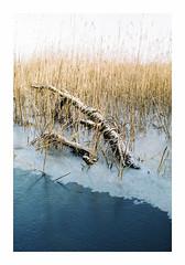 Local Pond (January) - Tudor XLX 200 (magnus.joensson) Tags: sweden swedish skåne pond frozen january c41 testroll fujica st801 carl zeiss mc flektogon 35mm tudor xlx 200 expired