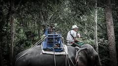 False god (Cédric Nitseg) Tags: slavery nikon asia abuse eye oeil greelow slave voyage backpacking elephant backpacker man travel animal travelling asie thaïlande kohsamui d7000 human éléphant thailand