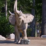 Birmingham Zoo 08-29-2017 - Elephant 8 thumbnail