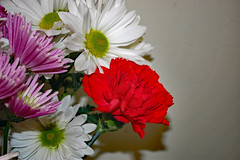 Bouquet For Valentine's Day. (dccradio) Tags: lumberton nc northcarolina robesoncounty indoor indoors inside flower floral flowers bouquet valentinesdaybouquet valentinesday carnation daisy february winter morning saturday saturdaymorning goodmorning nikon d40 dslr white pink red