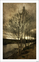 Otoño en el recuerdo (V- strom) Tags: paisaje landscape cielo sky nubes clouds árbol tree agua water otoño autumn texturas textures nikon nikon2470 nikond700 vstrom río river ocaso sunset panorámica panoramicphoto