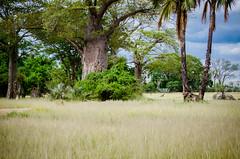 Malawi-Safari-1413
