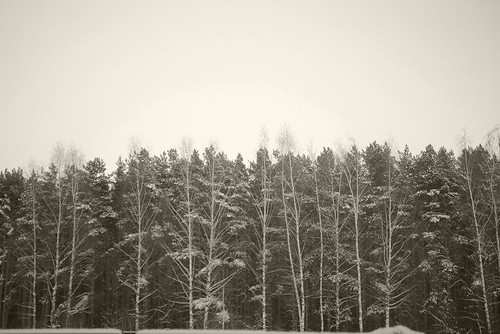 Winter forest ©  Andrey
