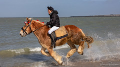 Straô Scharendijke 2019 (BraCom (Bram)) Tags: 169 bracom bramvanbroekhoven ellemeet facebook holland horse nederland netherlands noordzee northsea paard scharendijke schouwenduiveland strao straô zeeland beach branding evenement event feetwashing had historical historisch hoed nat sea sky snelheid speed splash strand surf traditie tradition voetwassen vrouw water wet widescreen woman zee nl action aktie moving running