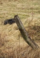 IMGP9685 (Robert Bębenek) Tags: przedwiośnie wieś przyroda nature early spring country