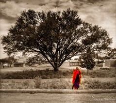 Maasai (d.portnoy) Tags: safari safaritanzania streetshots arusharegion tanzania tza maasai big tree