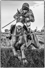 Over the Fence (Andy J Newman) Tags: blackandwhite jump nikon monochrome silverefex nature jockey didmarton race animals pointtopoint horse d500 horses badminton england unitedkingdom gb
