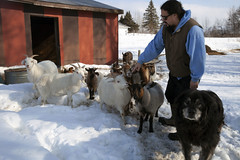 Mark with goats (massdistraction) Tags: goats goatfarm stpatricksday party saunaparty march snow winter outside friends fun goat farm farmparty sauna rural country