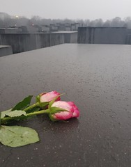 Denkmal für die ermordeten Juden Europas (cn174) Tags: berlin berlin2019 germany deutschland ber winter grey dismal memorialtothemurderedjewsofeurope denkmalfürdieermordetenjudeneuropas