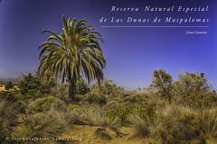 Gran Canaria (Fotomanufaktur.lb) Tags: schölkopf schoelkopf spain spanien grancanaria canaries dunas dünen maspalomas
