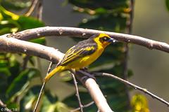 0I7A9021.jpg (Murray Foubister) Tags: africa gadventures spring birds tanazania flora travel 2018