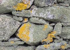 Stone Art (Sue MacCallum-Stewart) Tags: abstract shetland stone walls art scotland