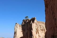 Bryce Canyon (olgatticus) Tags: america usa arizona utah canyon nature cool rocks bryce brycecanyon canon eos