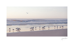 Morning Stroll (jrobfoto.com) Tags: a7rii alpha atlantic beach florida fullframe jacksonville jacksonvillepier ocean pastel raw seaguls sony sunrise jacksonvillebeach unitedstatesofamerica us