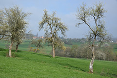 Le brouillard se lève enfin! (Excalibur67) Tags: nikon d750 sigma globalvision art paysage landscape arbres trees printemps spring frühling ciel sky floraison campagne brume mist