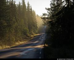 20160621_1 Forest road & yellow morning mist near Rjukan, Norway (ratexla) Tags: ratexlasnorwaytrip2016 driveitlikeyoustoleit norway 21jun2016 2016 canonpowershotsx50hs norge scandinavia scandinavian europe beautiful earth tellus photophotospicturepicturesimageimagesfotofotonbildbilder europaeuropean summer travel travelling traveling norden nordiccountries roadtrip wanderlust journey vacation holiday semester resaresor sommar nature landscape scenery scenic norwegian ontheroad morning fog mist dimma dis morgondimma forest trees road roads paved väg vägar påväg landsväg skogsväg ratexla favorite unlimitedphotos almostanything