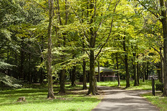 A SMALL AIRPORT, SOME PARKS AND CLOUDS - CLXXXIV (Jussi Salmiakkinen (JUNJI SUDA)) Tags: tokyo japan cityscape landscape 武蔵野 多摩 東京 日本 風景 sky 2018 september syyskuu autumn earlyautumn chofu 調布 park nogawapark 野川公園 syys woods forest