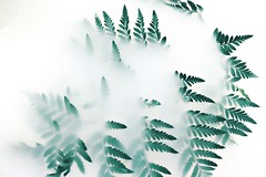 blur-bright-close-up-1405773 (toptenalternatives) Tags: blur bright closeup decoration design disjunct ecology environment fern leaves flora fog foggy green growth illustration light lush nature outdoors plant season smoke summer white wood