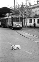 Sleepy dog (Manuel Goncalves) Tags: nikonn90s nikkor28mm foma100 35mmfilm blackandwhite santos brazil analogue epsonv500scanner