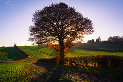 Back-lit (Phil-Gregory) Tags: nikon d7200 tokina1120mmatx tokina 1120mmproatx11 1120mm tree backlit light countryside green mosborough mossvalley sheffield scenicsnotjustlandscapes landscapes ngc